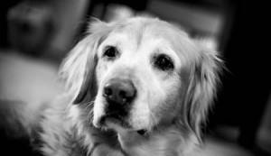 Dog-Cancer