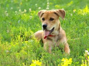 Dog health, Canine Cancer