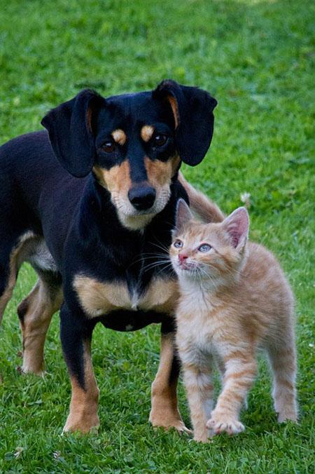 Pet Vaccination