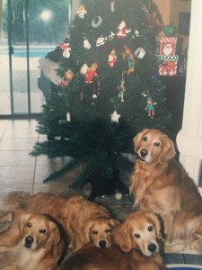 Casey, Duncan, Bailey and Ashby pose by the family tree!