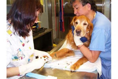 Chemotherapy for Dogs