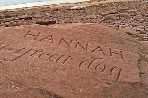 Hannah A Great Dog