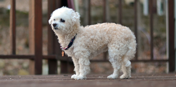 Kellys-Dog