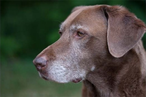 Canine Cancer Treatment