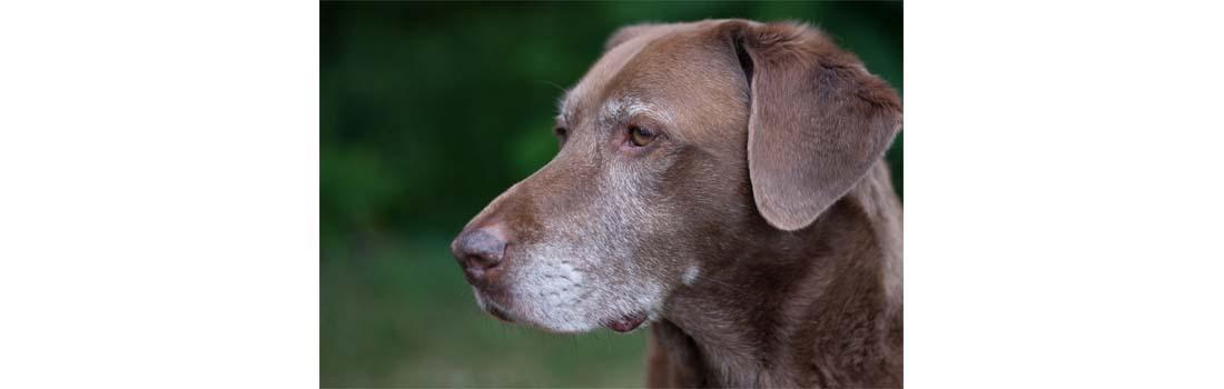 Canine Cancer Treatment