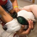 Canine Cancer Winnie