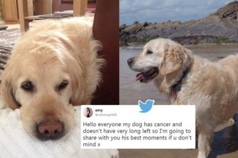 Archie Canine Cancer