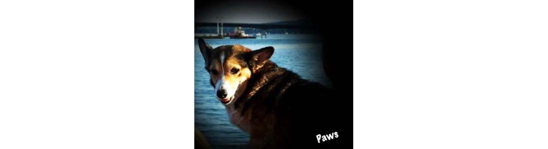 Paws-Dog With Cancer