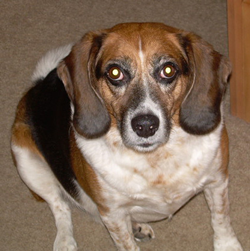Lucky who died of Cancer