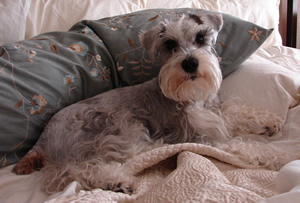 Bogie died of Cancer