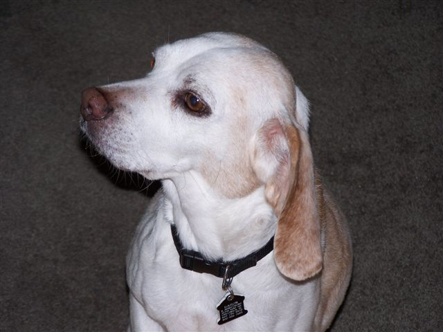 Buddy died of Cancer