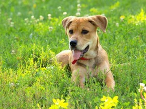 Dog health, Canine Cancer