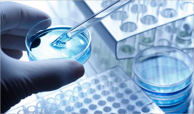 NCCF to fund innovative Hemangiosarcoma (HSA) research project