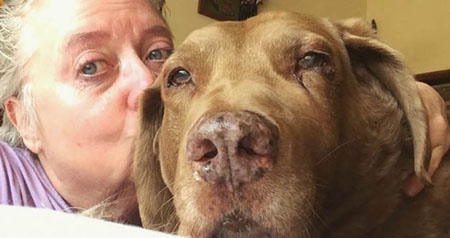 Rescue dog and Army veteran battle canine cancer