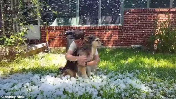 Dog owner who promised her dying pooch one last day in the snow creates a fake blizzard in Texas before he is euthanized