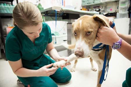 Dog Health Care-01