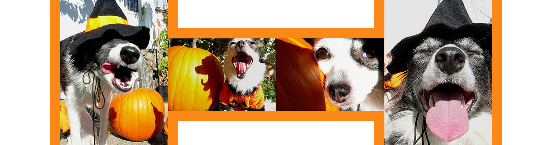 Keep your dog safe and happy this Halloween