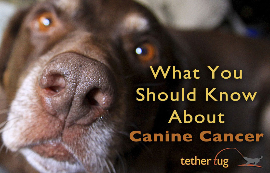 What You Should Know About Canine Cancer
