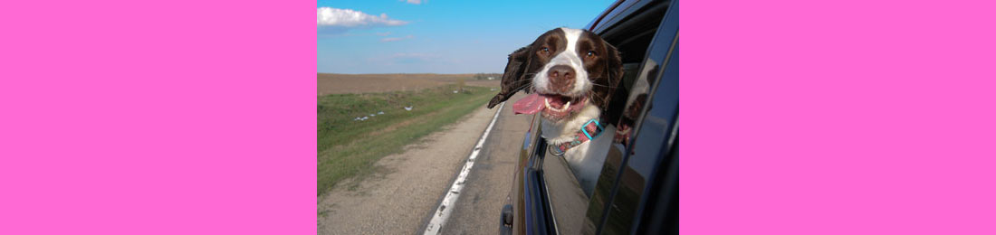 """Delivery Company """"Roadie"""" Partners withNational Canine Cancer Foundation to Help Dogs Make a Speedy Recovery"""