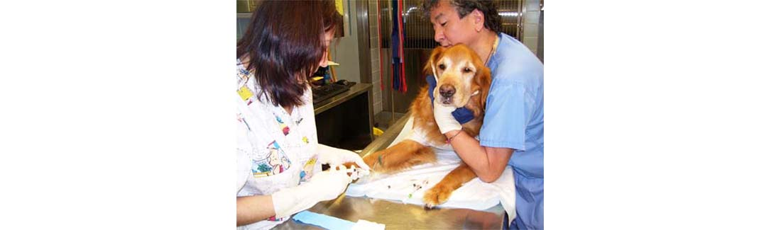 Treating Dogs with Cancer: The Difference between Chemotherapy and Radiotherapy