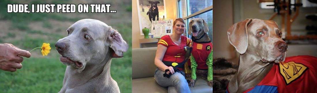 The Dog Behind The Meme And How You Can Help Canines With Cancer