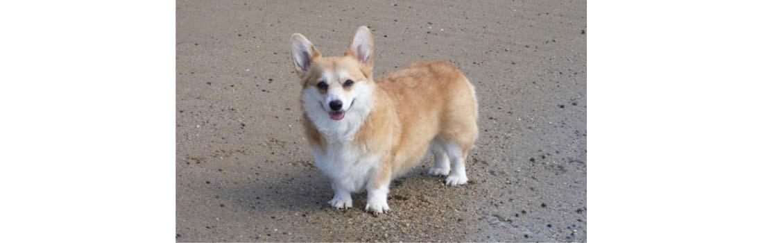 Canine Lymphoma Stories of Hope: Bella, Warrior Princess