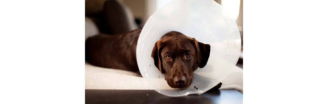 Tips for Prevention of Canine Cancer