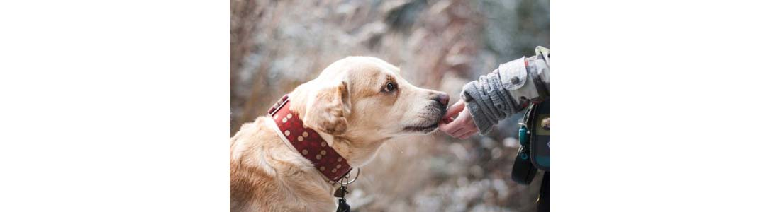 How to Care for a Dog with Cancer