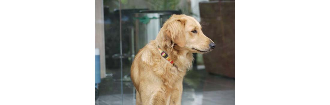 Canine Bone Cancers: Understanding The Different Types