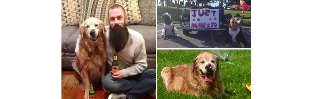 Poorly Molson the Golden Retriever is ticking off his bucket list before he dies from terminalcancer