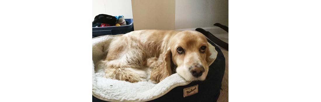 Coping With Loss – Rocky's Earthly Journey Has Come To An End