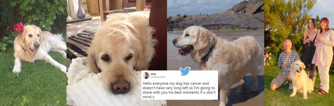 Girl shares heartbreaking tribute to her gorgeous dog, Archie, who recently passedaway