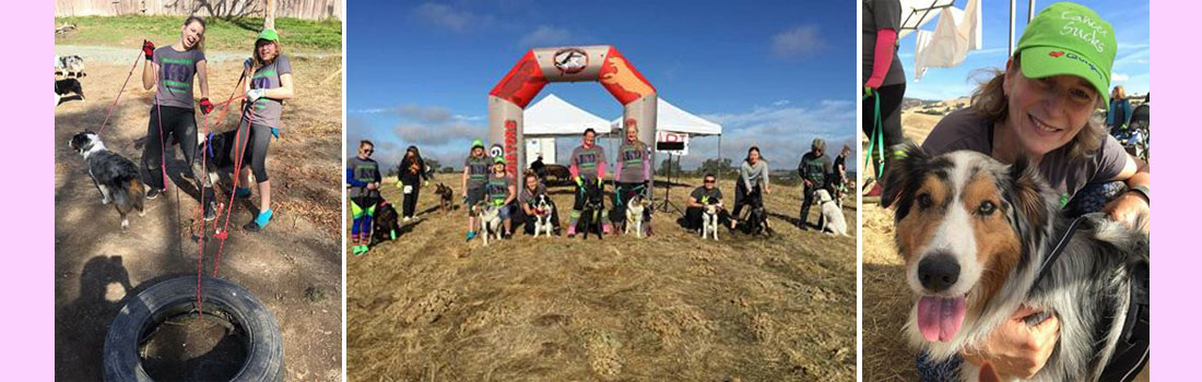 K9 Gladiator Mud Run and Obstacle course in Lone, CA raising money for National Canine Cancer Foundation