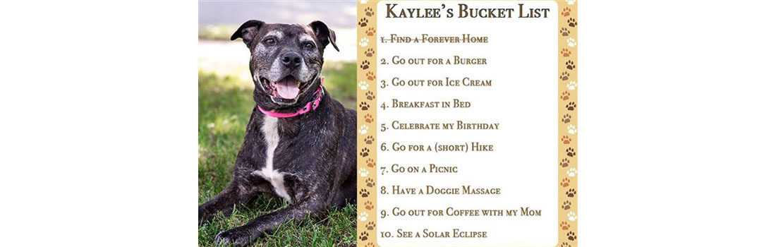 Family adopts senior dog, discovers she has cancer – so they did something amazing