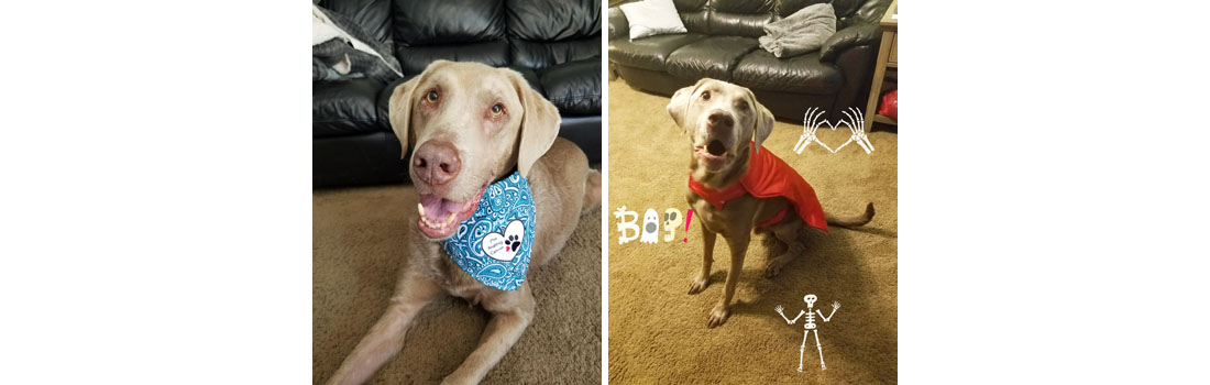 Milo is the reason she found National Canine Cancer Foundation and became a Core member