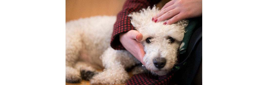 Losing a pet is a heartbreaking experience