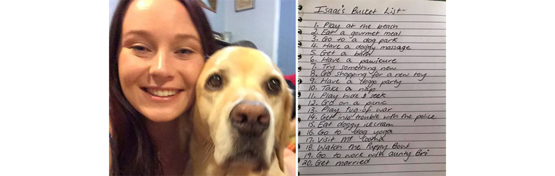 Retired guide dog Isaac ticks off a list of dying wishes after cancer diagnosis