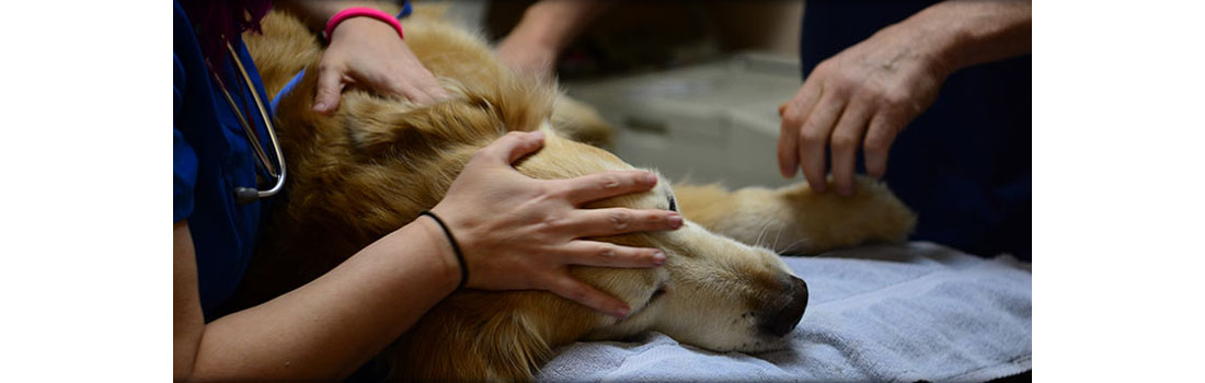 Pet Owners Share Heartwarming Stories Of Their Pets Final Moments
