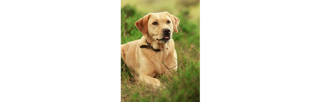 Probiotics For Dogs: Are They Beneficial?