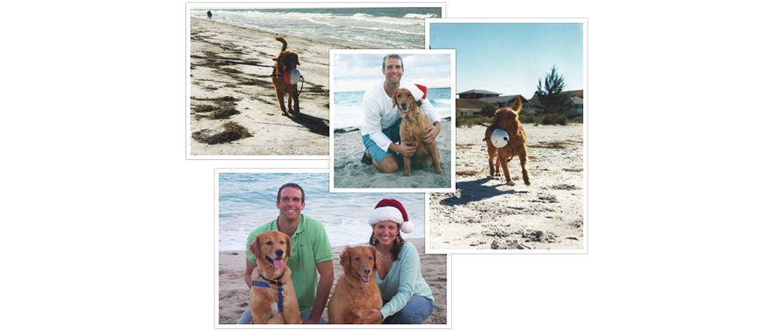 What our dogs have taught us – Merry Christmas!
