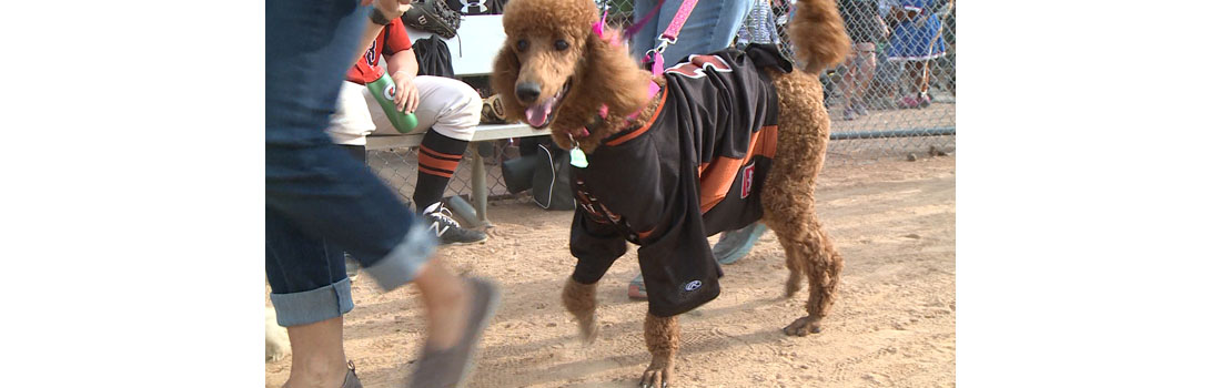 Bark in the Park at Carson Park helps fight canine cancer