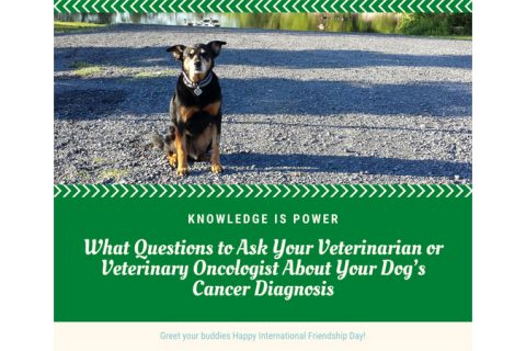 questions to ask vet about dog cancer diagnosis