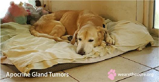 Apocrine Gland Tumors