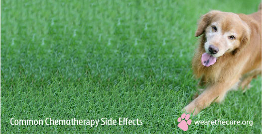 Common Chemotherapy Side Effects