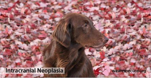 Intracranial Neoplasia