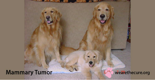 Mammary Tumor