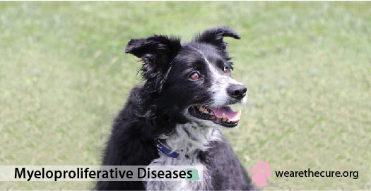 Myeloproliferative Diseases