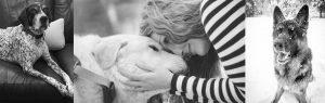 How do I treat dog cancer choosing the options