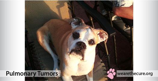 Pulmonary Tumors