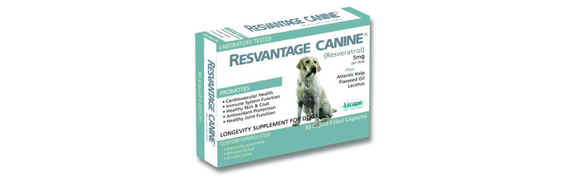 Can Resveratrol Cure Cancer in Dogs?